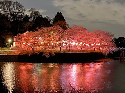 【奈良市学園前ホール】お茶とおみくじ